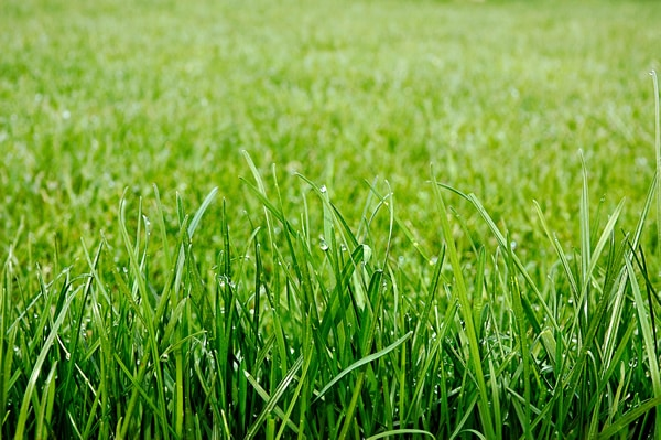 Freshly cut healthy green grass
